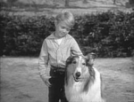 Timmy and Lassie